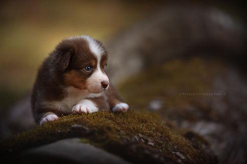 Обои Милый щенок на фоне природы, by Anne Geier