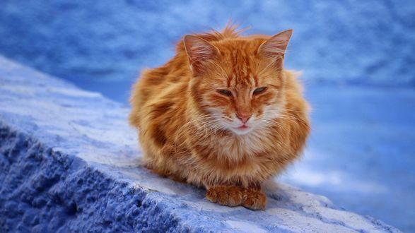Обои Рыжий кот сидит на камне