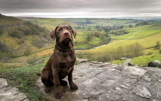 Обои Коричневый пес сидит на фоне равнины