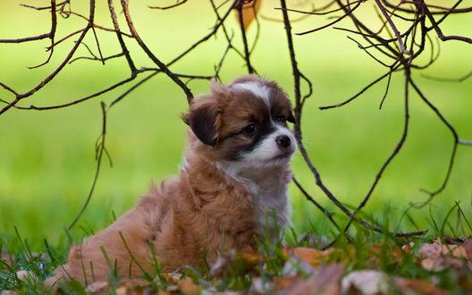 Обои Милый щенок на траве, покрытой осенними листьями