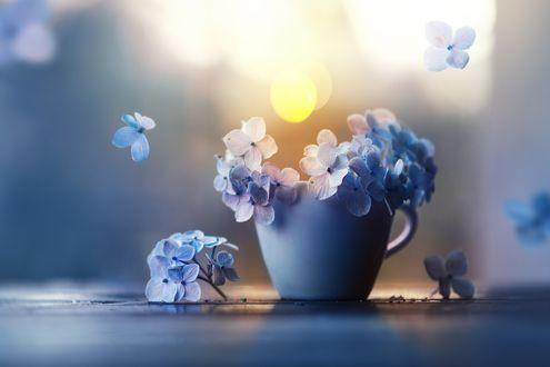 Обои Цветки голубой гортензии в чашке на размытом фоне, автор Ashraful Arefin