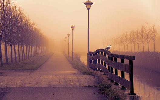 Обои В туманном парке с фонарями и голыми деревьями на заборе у воды сидит чайка