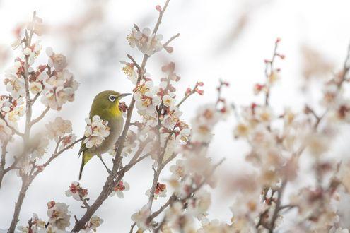 Обои Птичка сидит на весенней ветке