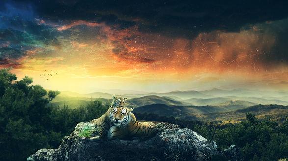 Обои Тигры лежат на камне на фоне неба, by FantasyArt0102