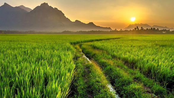 Обои Ранее утро, дорога в поле, которая уходит вдаль