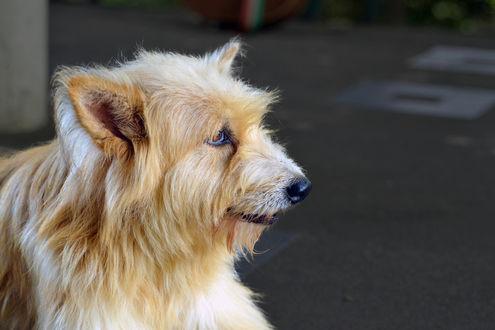 Обои Собака на размытом фоне, by Kaushal Vaidya