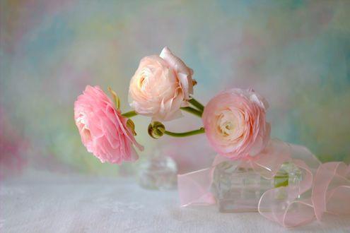 Обои Розовые камелии в вазе на столе, фотограф Sonata Zemgulienе