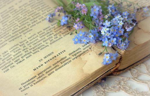 Обои Незабудки лежат на открытой книге, фотограф Sonata Zemgulienе