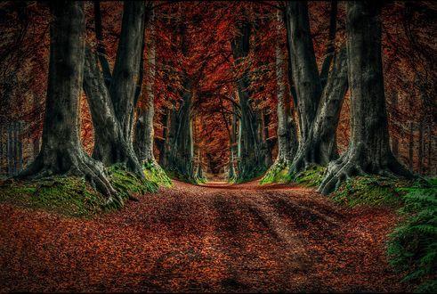 Обои Дорога в осеннем лесу