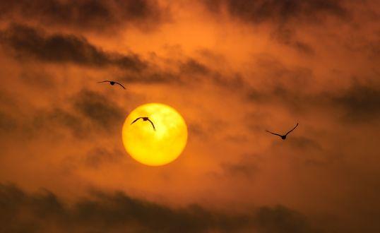 Обои Птицы, летящие на фоне заходящего солнца и оранжевых туч