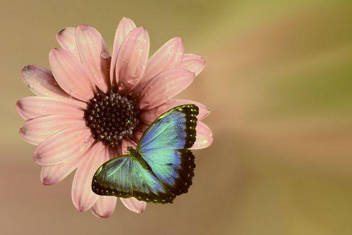 Обои Бабочка на розовом цветке