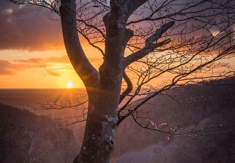 Обои Дерево на фоне солнца