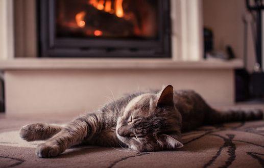 Обои Спящий полосатый котик у камина