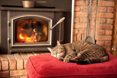 Обои Спящий полосатый кот на пуфике у камина