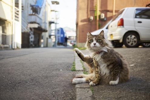 Обои Кот, подняв лапку, сидит на тротуаре, by NEKOFighter