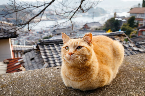 Обои Рыжий кот, устроившийся на крыше, размытый фон