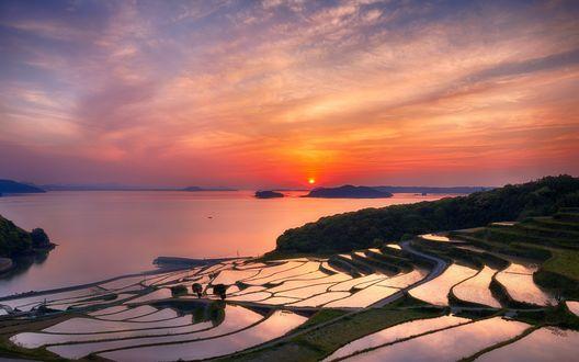 Обои Рисовые поля на закате солнца, Нагасаки, Япония