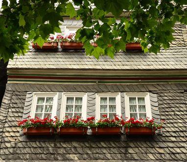 Обои Цветочные горшки за окнами дома, с растущими в них красными цветами, ветка дерева на переднем плане