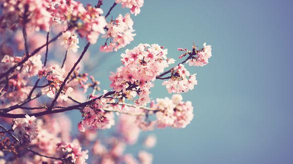 Цветущая ветка сакуры на фоне неба