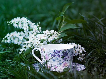 Обои Чашка на блюдце стоит в траве с весенней веточкой, by Maria Fisenko