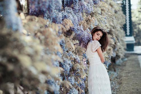 Обои Девушка стоит у цветущих кустов, фотограф Jovana Rikalo
