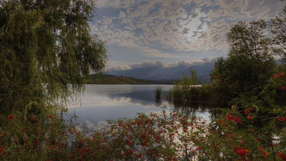 Обои Цветы, деревья и кустарники на берегу озера на фоне гор и спрятавшегося за облаками солнца