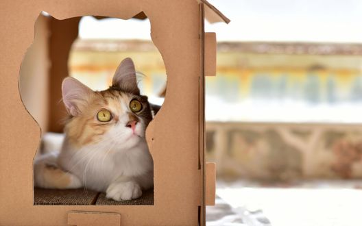 Обои Рыжий кот сидит в своем домике с фигурными вырезами на размытом фоне и куда-то смотрит