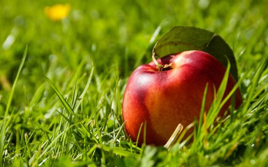 Обои Большой спелый нектарин лежит на траве