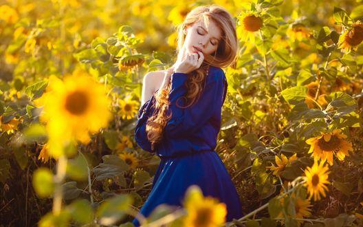 Обои Светловолосая девушка в синем платье на поле желтых подсолнухов, освещенных ярким солнцем