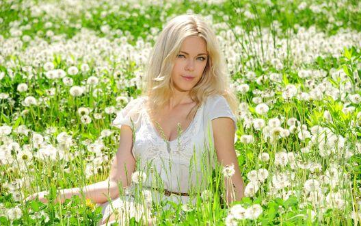 Обои Девушка-блондинка в белом платье среди поляны белых одуванчиков