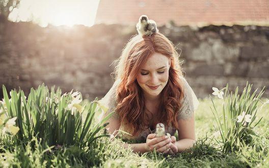 Обои Русоволосая девушка лежит на полянке с белыми нарциссами, а у нее на голове и в руках - маленькие птенцы