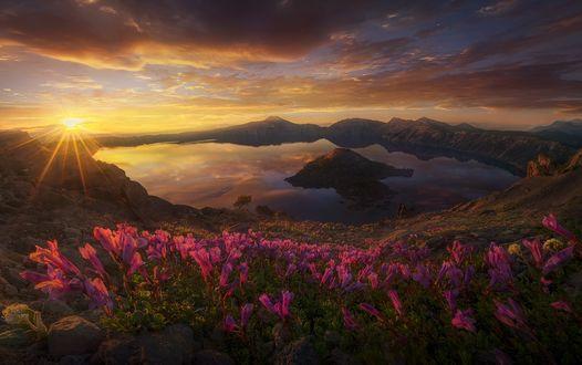 Обои Солнце освещает озеро и цветы перед ним, фотограф Marc Adamus