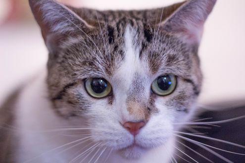 Обои Мордочка котенка на размытом фоне
