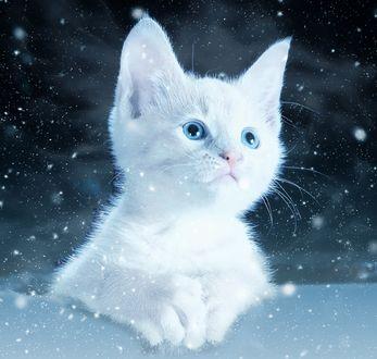 Обои Белый пушистый котенок на фоне звездного неба
