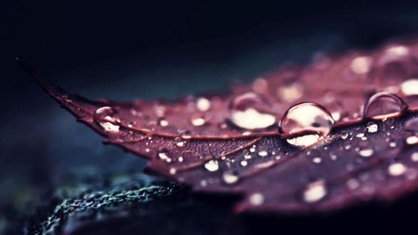Обои Капли воды на листе, макросъемка