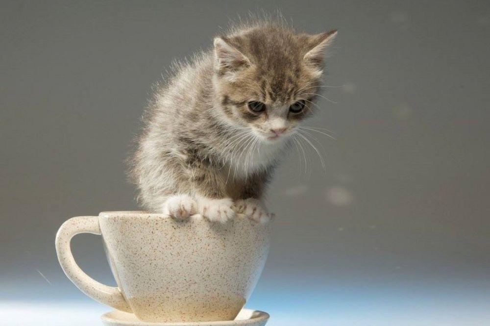 набор котята в кружке картинки еще одна причина