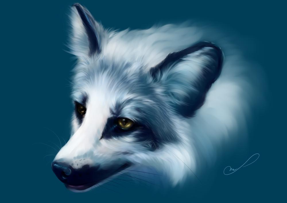 Обои для рабочего стола Портрет белоснежного волка, by Martith