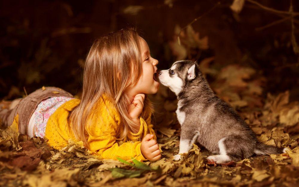 Обои для рабочего стола Девочка лежит на осенних листьях возле щенка хаски