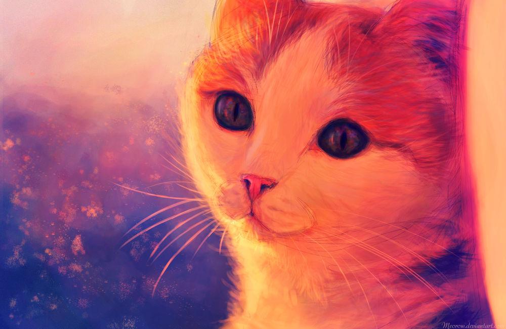 Обои для рабочего стола Портрет рыжо-белой кошки, by Meorow