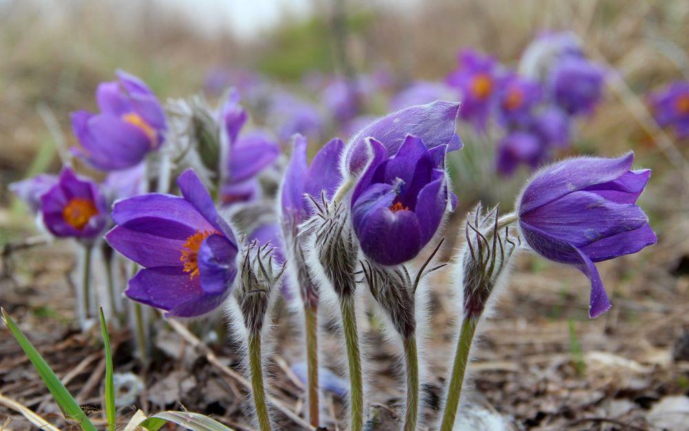 Во сне цветы фиолетовые