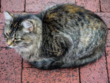 Обои Пушистый кот, свернувшийся клубком на каменном полу
