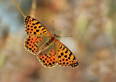 Обои Бабочка на размытом фоне