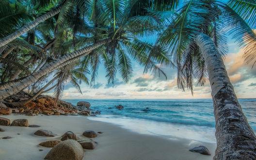 Обои Пальмы на тропическом острове у моря