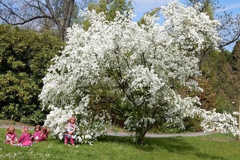 Обои Дети играют в парке под цветущем деревом, Grugapark в Эссене, Германия
