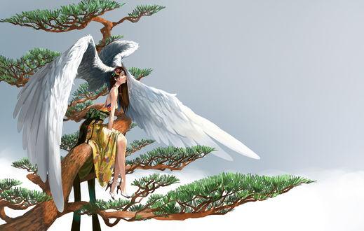 Обои Девушка-ангел на дереве, автор Somehira Katsu