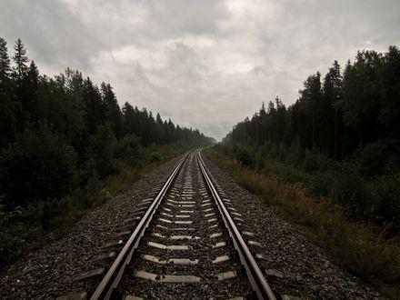Обои Железная дорога среди леса