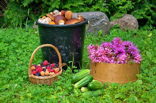 Обои Богатый летний урожай грибов, ягод и овощей