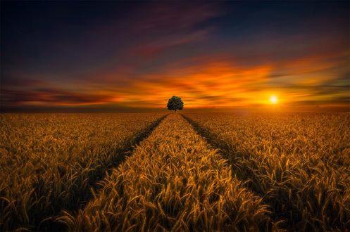 Обои Одинокое дерево на горизонте, by hmetosche