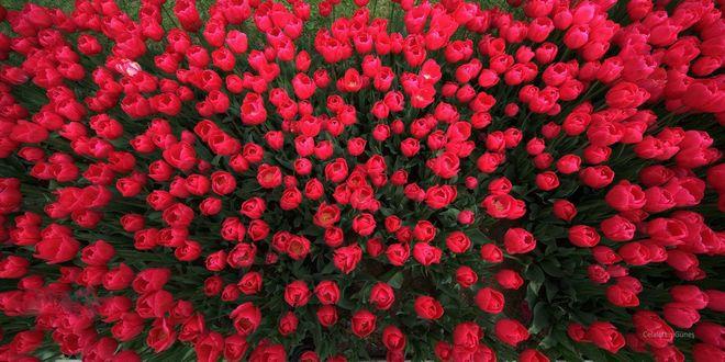 Фото цветы в вазе на зеленом фоне 43