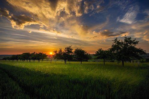 Обои Закат над зеленым полем, фотограф Ralf Thomas